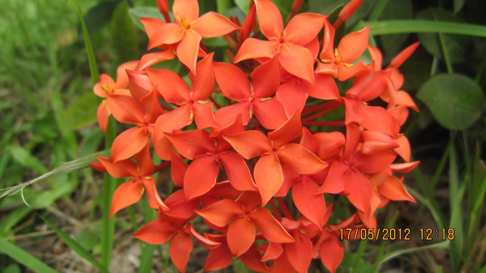 Different Flowers In Bangladesh Description