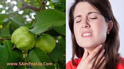 Benefits Of Guava Leaves In Hindi | अमरूद की पत्तियों के फायदे