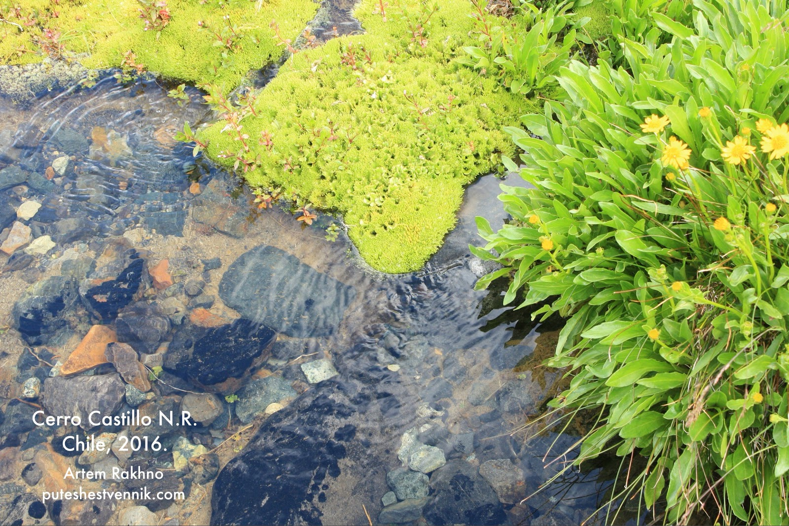 Мох и прозрачный ручей