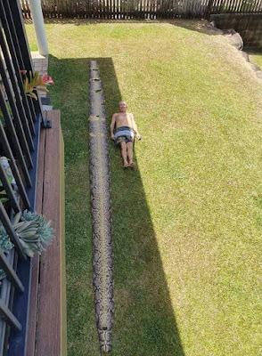 Foto utuh kulit ular 8 meter