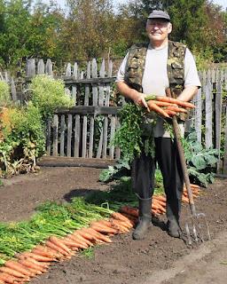 Уборка урожая морковки