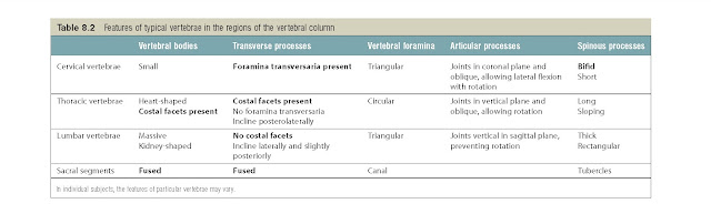 Features of typical vertebrae in the regions of the vertebral column