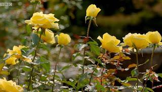 Kyu-Furukawa Rose Garden