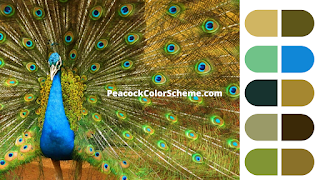 peacock color palette, peacock color images