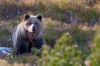 Medve%2BAdam%2BWajrak%2B01
