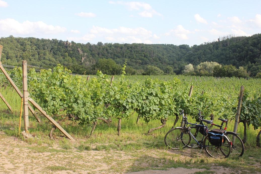 Vinice Šobes ideální místo pro výlety na kole
