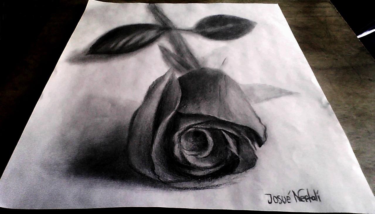 Como Dibujar Una Rosa En 3D A Lápiz Paso A Paso