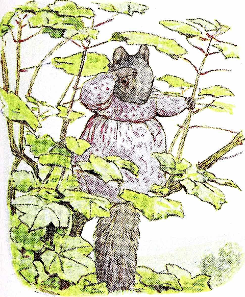 a Beatrix Potter children's book illustration 1939, mother squirrel