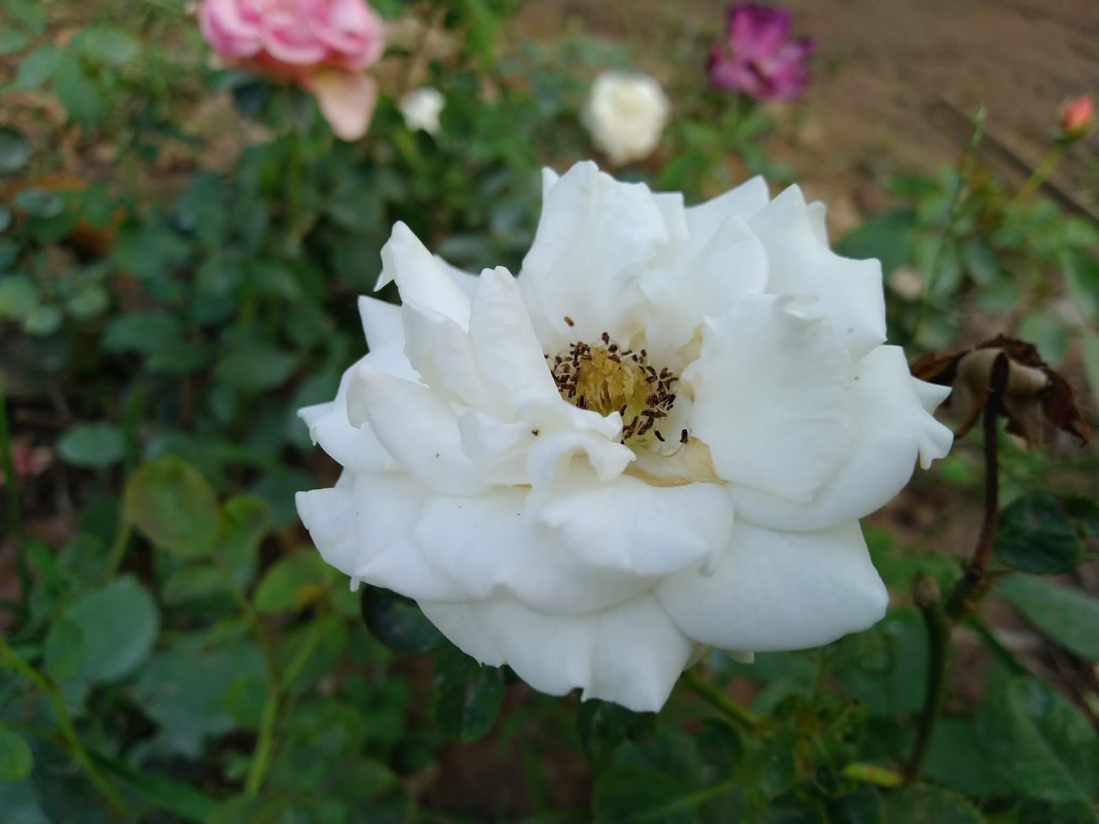 Asus Zenfone Max Pro M1 camera test samples review 2
