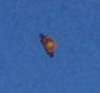 UFO News - Cylinder UFO Caught on Animal Cam plus MORE Malta%252C%2Bmarsaskala%252C%2Btank%252C%2Barcheology%252C%2BGod%252C%2BNellis%2BAFB%252C%2BMoon%252C%2Bunidentified%2Bflying%2Bobject%252C%2Bspace%252C%2BUFO%252C%2BUFOs%252C%2Bsighting%252C%2Bsightings%252C%2Balien%252C%2Baliens%252C%2BFox%252C%2BNews%252C%2Bastronomy%252C%2Btreasure%252C%2B3