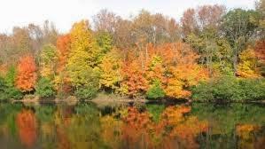 imagen otoño