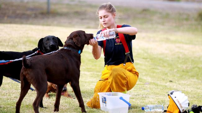 Caring-for-dogs-during-bushfire