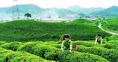 Black Tea Private Sourcing Private Labeling Products