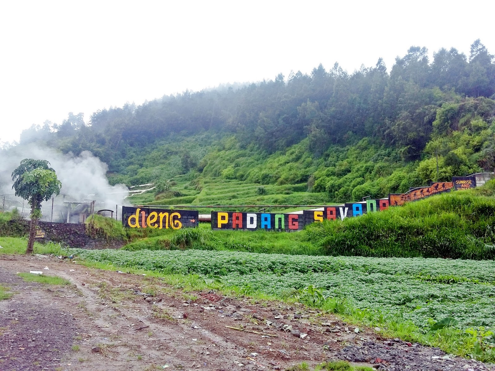 Image result for padang savana sumurup dieng