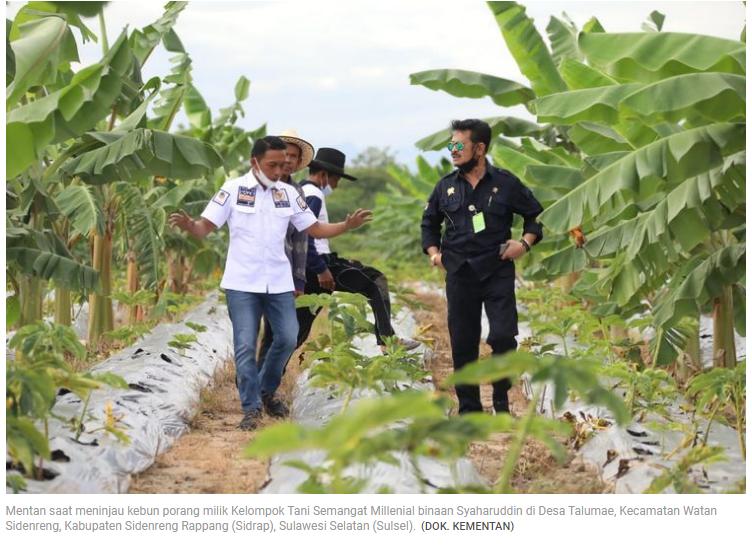 Menteri Pertanian SYL Ajak Petani Milenial Garap Porang untuk Komoditas Andalan Nasional