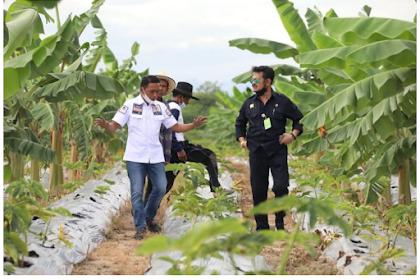 Menteri Pertanian Ajak Petani Milenial Garap Porang untuk Komoditas Andalan Nasional