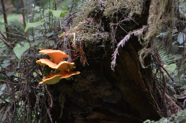 red fungus