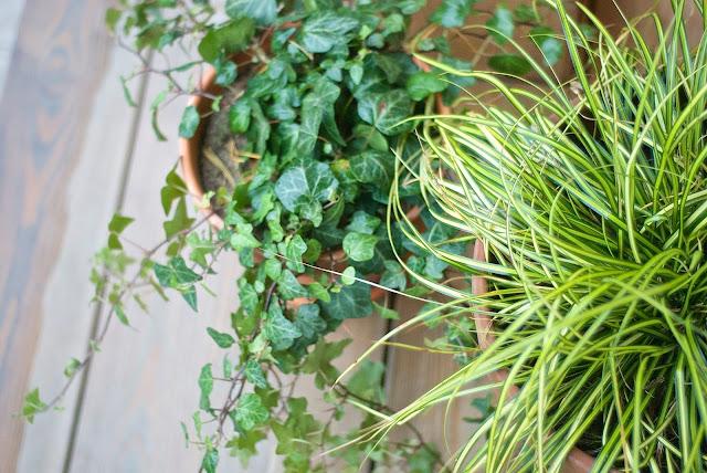 muratti, heinä