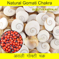 Free 11 Pcs Rakt Gunja Rs.101 Only Shop Online