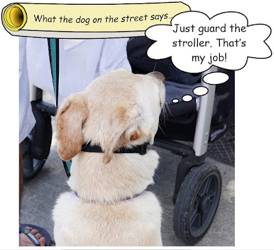 http://dogsarefun.club/2016/07/08/just-guard-the-stroller/