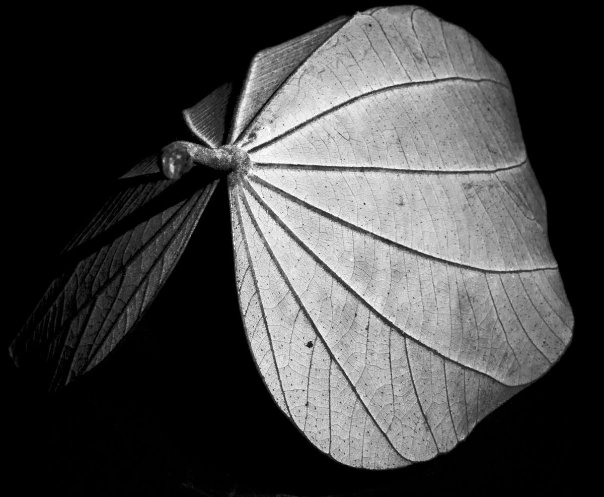 photo: lutin