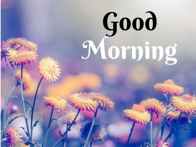 Good Morning Whatsapp Images HD