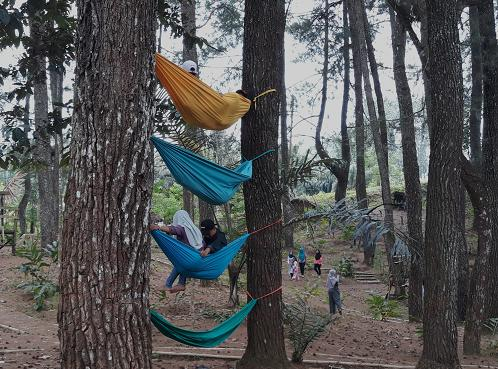 Hutan Pinus Lampung Barat