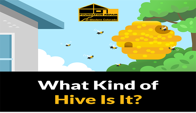Removing your home from Bee and Wasp Hives #infographic