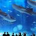 Makin Seru, Simak Berbagai Ragam Aktivitas dan Wahana Di Sea World