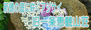 新緑の庭に咲くアジサイ~旧一条恵観山荘~