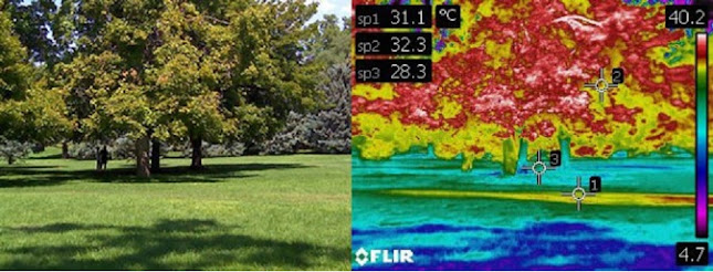 Trees and lawns beat the heat