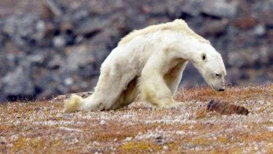 Соцсети пришли в ужас от видео с умирающим медведем
