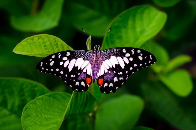 pelajaran dari alam kupu kupu