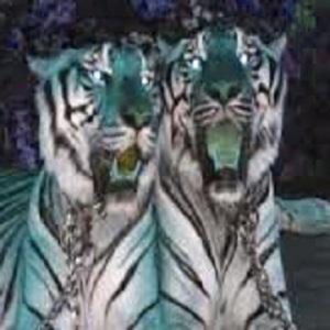 Mustika Macan Kembar Banaspati Sakral