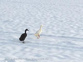 schwarze und weisse gans beim Spaziergang im Schnee