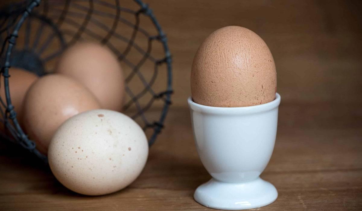فؤائد المداومة علي تناول البيض يوميا