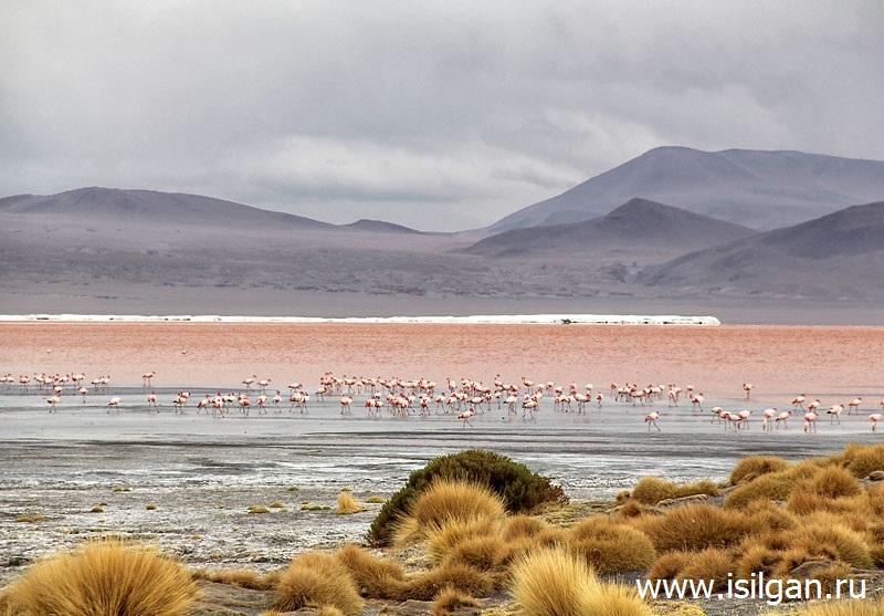 Лагуна Колорадо (Laguna Colorado). Национальный заповедник Эдуардо Авароа (Eduardo Avaroa Andean Fauna National Reserve). Боливия