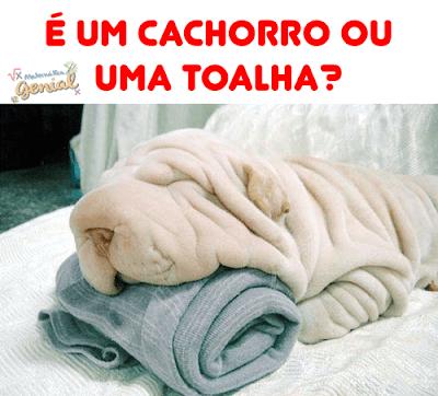 Teste de visão: É uma toalha ou um cachorro?