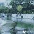 Suối Mơ: Điểm nghỉ mát đẹp khó cưỡng tại Đồng Nai cách Sài Gòn 3h đồng hồ