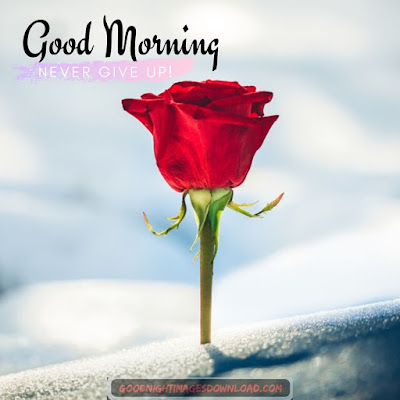 Lovely good morning images with rose flowers