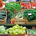 COVID 19 - Ministério da Agricultura lança programa para apoiar produtos locais