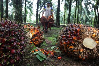 Lowongan Kerja Pekanbaru : PT. Global Bangunan Jaya (Perusahaan Perkebunan Sawit) Maret 2017