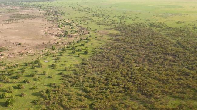 A Grande Muralha Verde será a maior estrutura viva do planeta/Reprodução