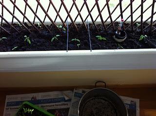 plantekasser med espalier
