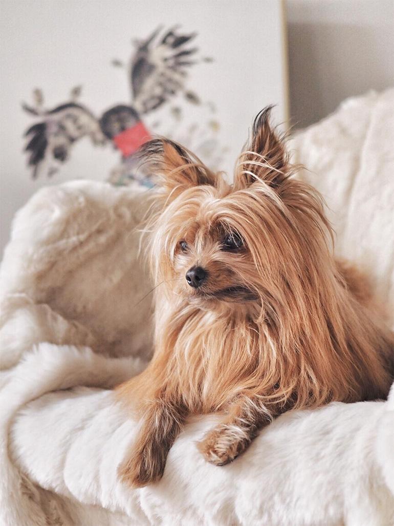 Jouer et passer du temps avec son chien - idées d'activités pour créer du lien - blog Louise Grenadine