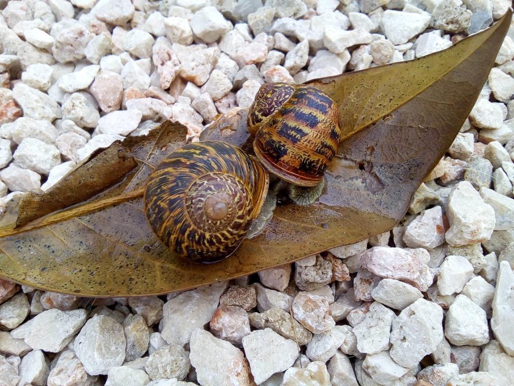 Entre amigos caracoles en el jard n for Caracoles en el jardin
