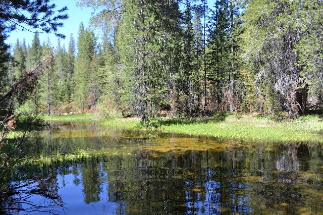 Sugarloaf Creek looking like a pond