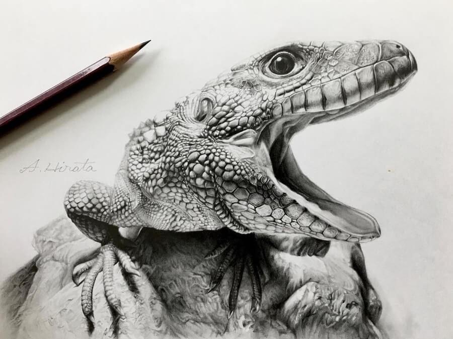 08-Lizard-from-South-America-A-Hirata-www-designstack-co