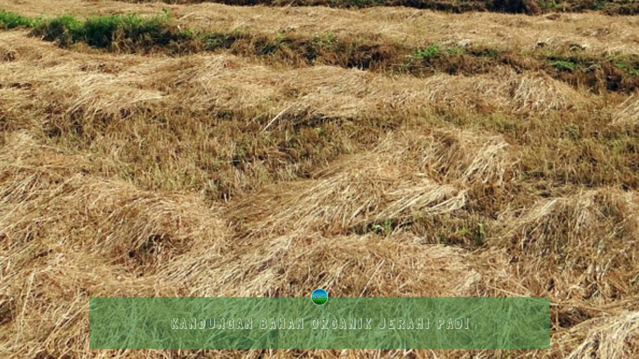 Kandungan Bahan Organik Jerami Padi