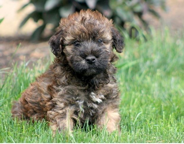 BEST PUPPIES FOR SALE LONG ISLAND NEW YORK